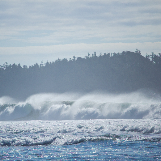 storm watching, vancouver island, bc, whales
