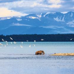 Alaska, cruise, Princess, Holland America, iceberg, Skagway
