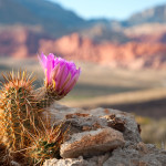 arizona, winter, escape, mesa, tucson, yuma